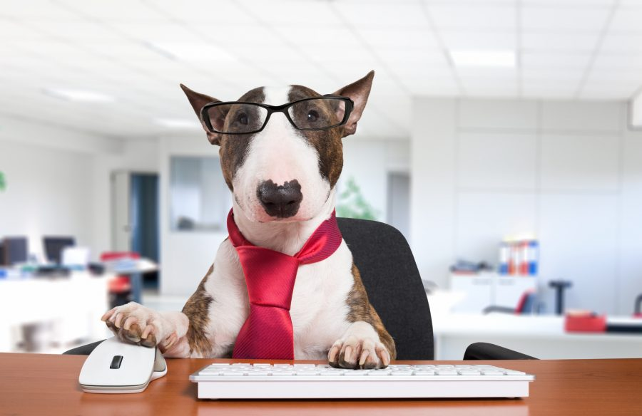 The Office Dog Pros And Cons